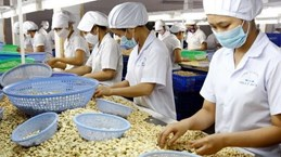 Vietnam's cashew nut exports to China surge in nine months