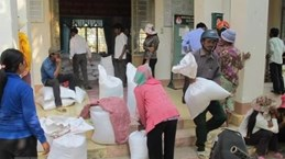 Over 1,200 tonnes of rice from national reserve allocated to Nghe An