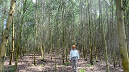 Tuyen Quang boasts over 25,000 ha of certified forest