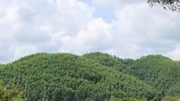 Bac Giang encouraging production forest development