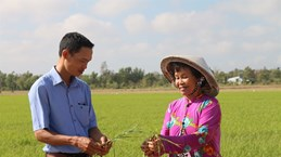 Tra Vinh takes measures to deal with drought, saltwater intrusion
