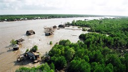 Environment monitoring project in mangroves launched in Ca Mau