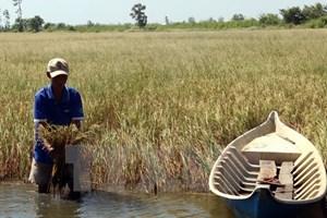Early rain dilutes salinity in Hau Giang