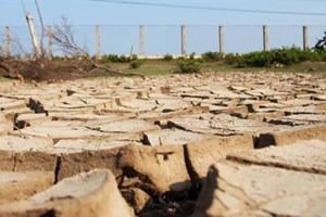 Mekong Delta drought losses total 215 million USD