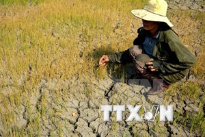 Lam Dong allocates over 1 million USD for drought relief