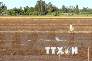 Tra Vinh loses 49.5 million USD due to drought, saline intrusion