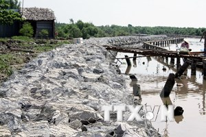 Sea dike development project gets green light in Ca Mau