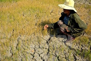 Officials scope out salinity, drought in localities