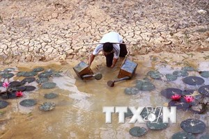 Ca Mau deals with drought, saltwater intrusion