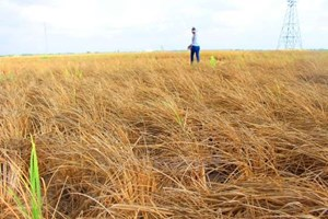 Vietnam ensures food security amid climate change