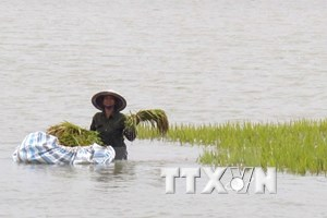Financial assistance allocated for storm-hit provinces