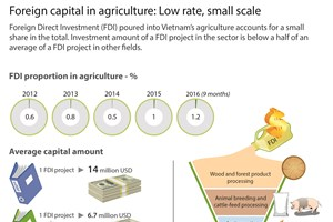 Foreign capital in agriculture: Low rate, small scale