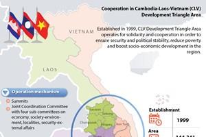 Cooperation in CLV Development Triangle Area