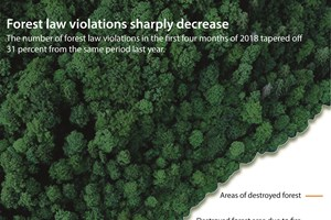 Forest law violations sharply decrease