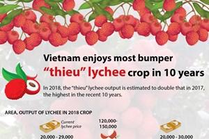 "Vietnam enjoys most bumper ""thieu"" lychee crop in 10 years"
