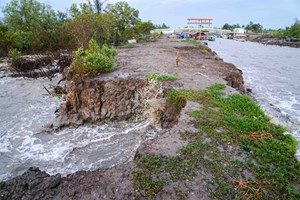 Sea dyke erosion worsens in Mekong Delta