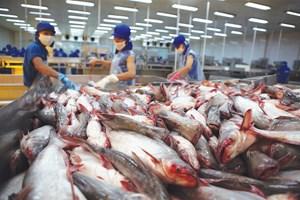 Vietnam's Tra fish export sees competitors
