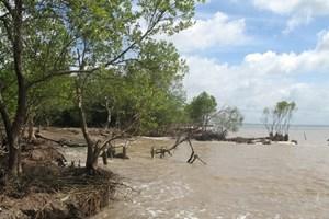 Tien Giang: Erosion worsens in coastal areas