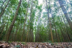 Vietnam sets goals for sustainable forestry development