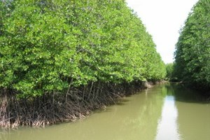 Ca Mau moves to protect coastal forests