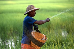 Myanmar earns 1.11 billion USD from rice exports