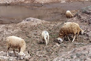 Workshop talks goat, sheep farming amid climate change