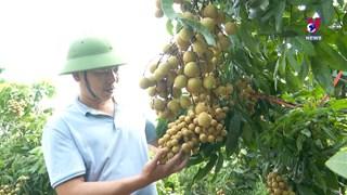 Vietnamese longan make inroads into fastidious markets