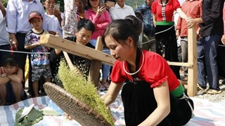 Tu Le young sticky rice flake festival