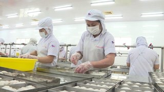 Yellow card pushes seafood industry developing sustainably