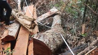 Bac Kan authorities to prosecute deforestation culprits