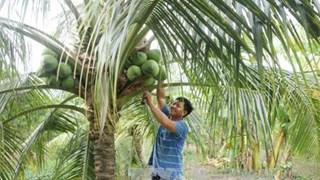 Ben Tre festival promotes coconut industry