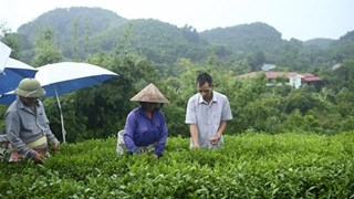 Loans lift farmers in Thai Nguyen out of poverty