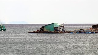 Kien Giang expands marine aquaculture on industrial scale