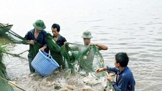 Vinh Phuc: aquaculture output up nearly 5 percent
