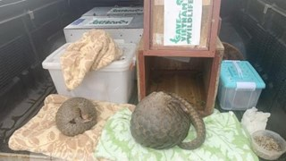 Nghe An police arrest two men illegally transporting pangolins