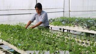 Tien Giang enjoys fruitful agricultural restructuring