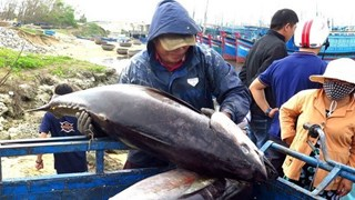 Egypt emerges as promising market for Vietnamese canned tuna