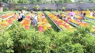 Dong Thap's flower, ornamental plant output surges