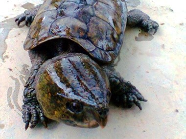 Wildlife trafficker sentenced to 10 years in prison