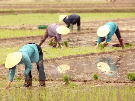 Canada doles out 12.9 million USD for Vietnam's agriculture