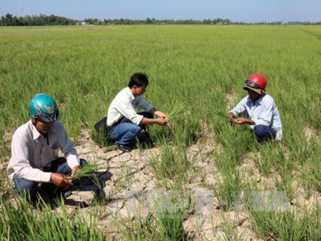 Drought affects over 13,000 households in Tra Vinh