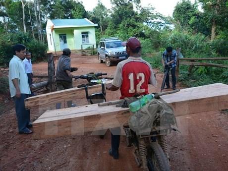 PM asks for investigating deforestation in Kon Tum