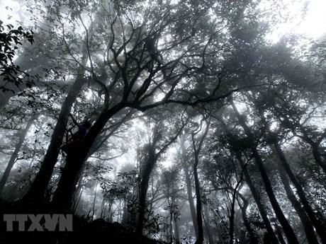 Grandiose beauty of Ta Lien Son forest in Lai Chau