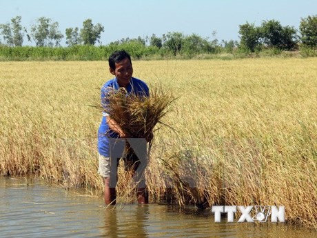 Forum seeks to adapt Mekong Delta's agriculture to climate change