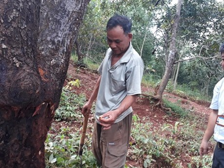 Binh Phuoc farmers learn new techniques for cashew cultivation