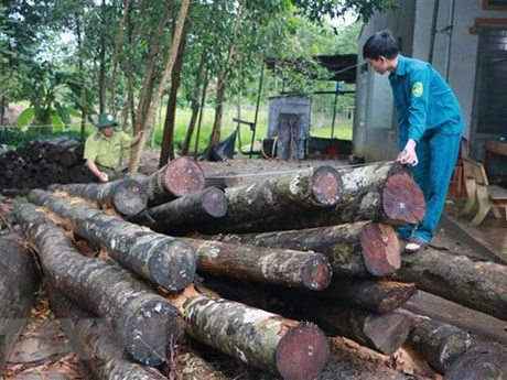 Timber farmers should think big to boost growth