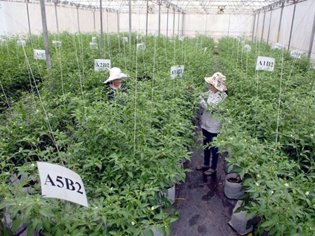 HCM City specifies key agricultural products