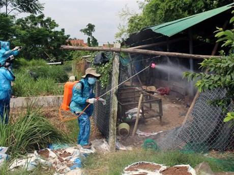 Bird flu detected in Phu Yen province
