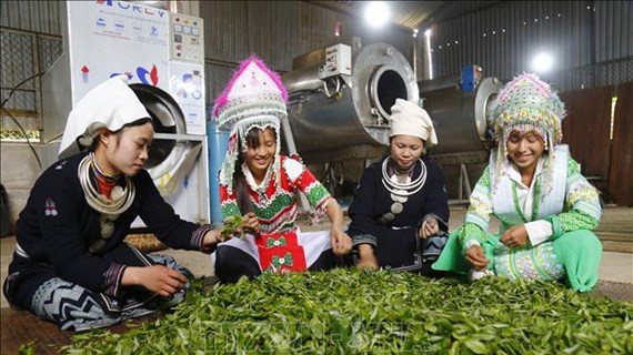 Remarkable progress seen in farming in ethnic minority-inhabited, remote areas
