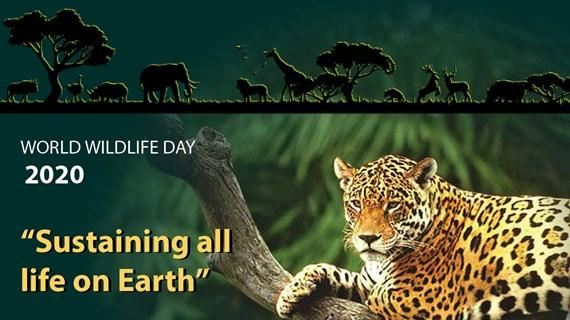 World Wildlife Day 2020 highlights the importance of biodiversity